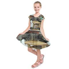 Maine Coon Laying 2 Kids  Short Sleeve Dress