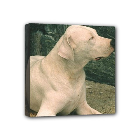Dogo Argentino Laying  Mini Canvas 4  x 4