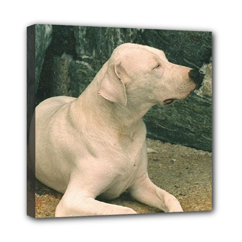 Dogo Argentino Laying  Mini Canvas 8  x 8