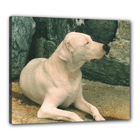 Dogo Argentino Laying  Canvas 24  x 20