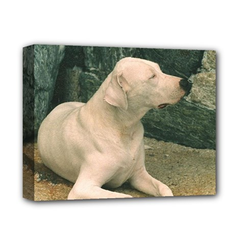 Dogo Argentino Laying  Deluxe Canvas 14  x 11