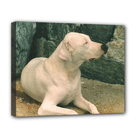 Dogo Argentino Laying  Deluxe Canvas 20  x 16