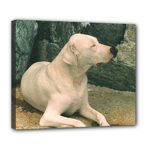 Dogo Argentino Laying  Deluxe Canvas 24  x 20