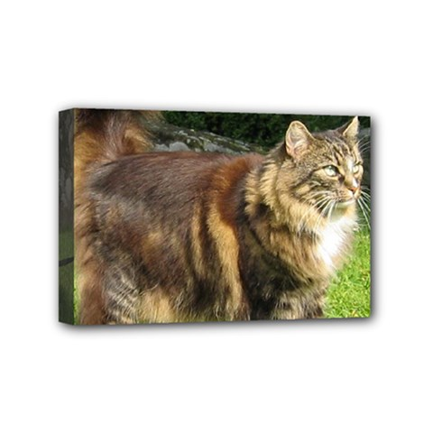 Norwegian Forest Cat Full  Mini Canvas 6  x 4