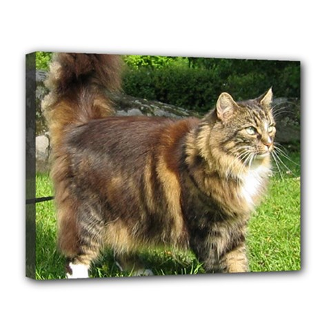 Norwegian Forest Cat Full  Canvas 14  x 11