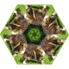 Norwegian Forest Cat Full  Mini Folding Umbrellas