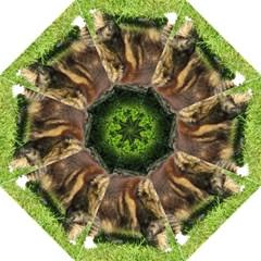 Norwegian Forest Cat Full  Hook Handle Umbrellas (Large)