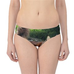Norwegian Forest Cat Full  Hipster Bikini Bottoms