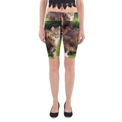 Norwegian Forest Cat Full  Yoga Cropped Leggings