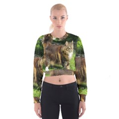 Norwegian Forest Cat Full  Women s Cropped Sweatshirt