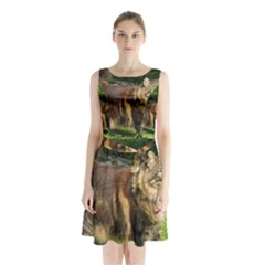 Norwegian Forest Cat Full  Sleeveless Chiffon Waist Tie Dress