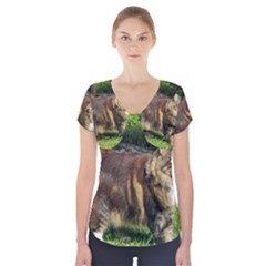 Norwegian Forest Cat Full  Short Sleeve Front Detail Top
