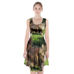 Norwegian Forest Cat Full  Racerback Midi Dress