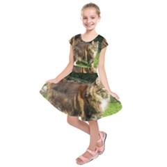 Norwegian Forest Cat Full  Kids  Short Sleeve Dress