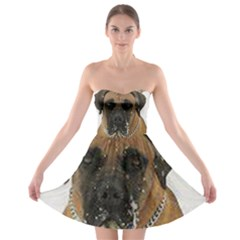 Boerboel  Strapless Bra Top Dress