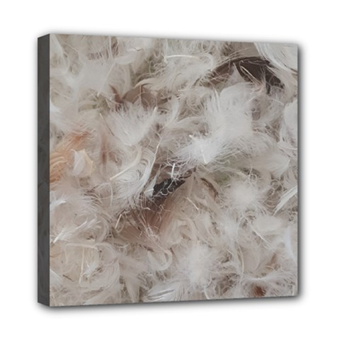 Down Comforter Feathers Goose Duck Feather Photography Mini Canvas 8  x 8