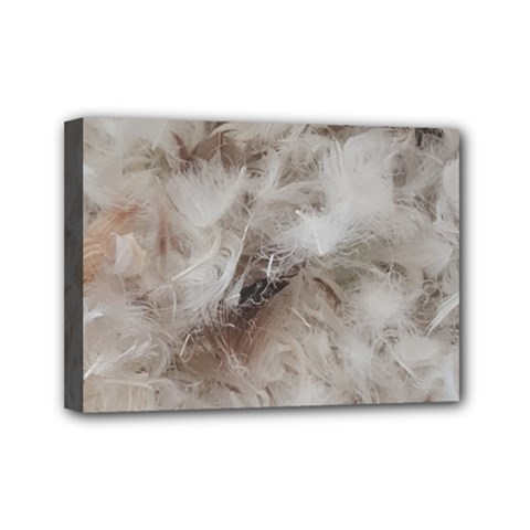 Down Comforter Feathers Goose Duck Feather Photography Mini Canvas 7  x 5
