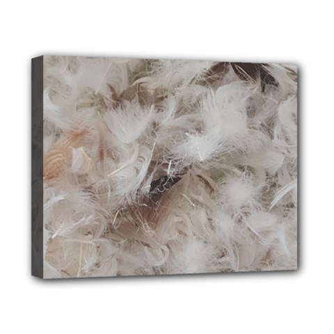 Down Comforter Feathers Goose Duck Feather Photography Canvas 10  x 8