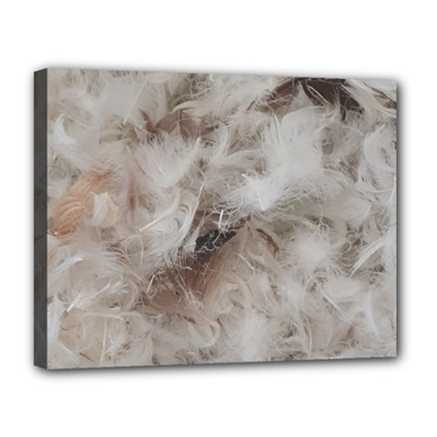 Down Comforter Feathers Goose Duck Feather Photography Canvas 14  x 11