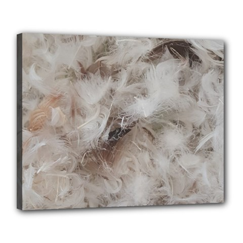 Down Comforter Feathers Goose Duck Feather Photography Canvas 20  x 16