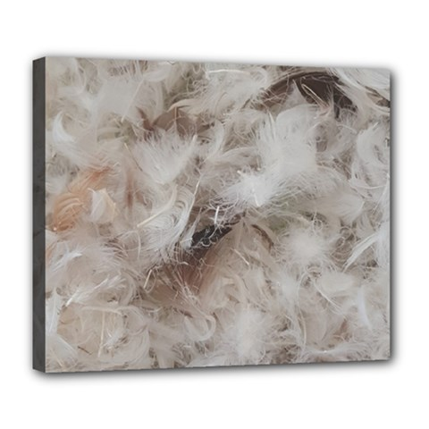 Down Comforter Feathers Goose Duck Feather Photography Deluxe Canvas 24  x 20