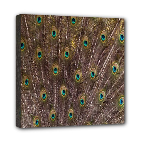 Purple Peacock Feather Wallpaper Mini Canvas 8  x 8