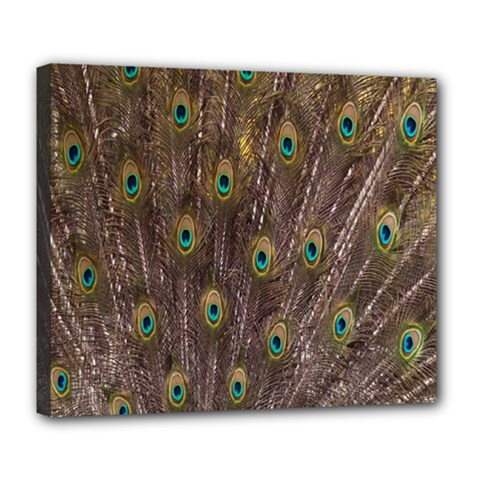 Purple Peacock Feather Wallpaper Deluxe Canvas 24  x 20
