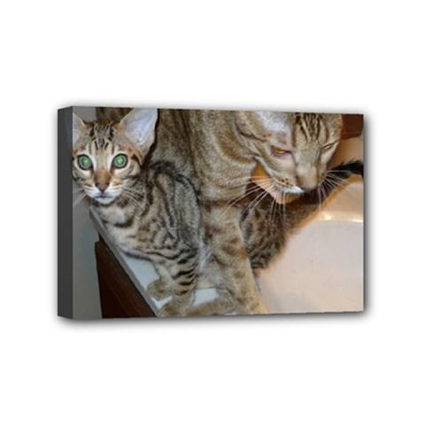 Ocicat Tawny Kitten With Cinnamon Mother  Mini Canvas 6  x 4