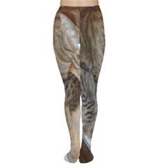 Ocicat Tawny Kitten With Cinnamon Mother  Women s Tights