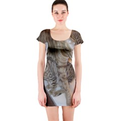 Ocicat Tawny Kitten With Cinnamon Mother  Short Sleeve Bodycon Dress