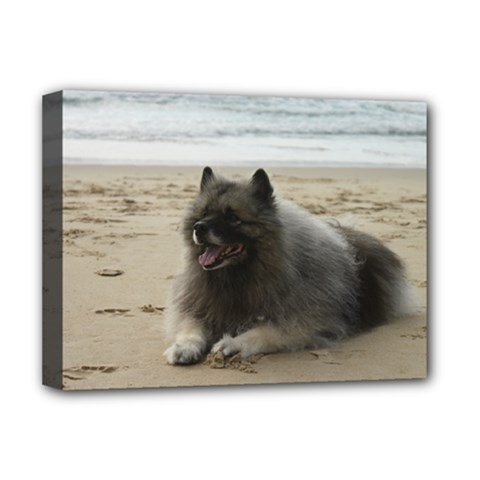 Keeshond On Beach  Deluxe Canvas 16  x 12