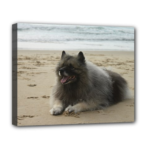 Keeshond On Beach  Deluxe Canvas 20  x 16