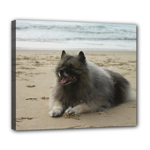 Keeshond On Beach  Deluxe Canvas 24  x 20
