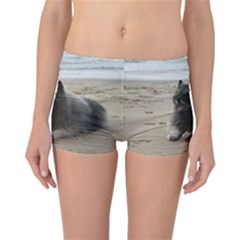 Keeshond On Beach  Reversible Bikini Bottoms