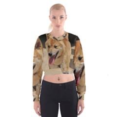 4 Shiba Inu Women s Cropped Sweatshirt