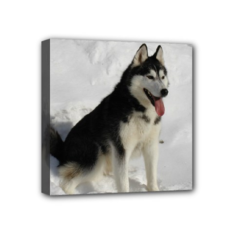 Siberian Husky Sitting in snow Mini Canvas 4  x 4