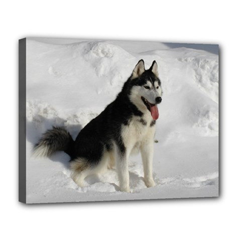 Siberian Husky Sitting in snow Canvas 14  x 11