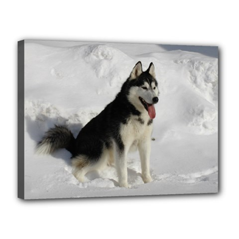 Siberian Husky Sitting in snow Canvas 16  x 12