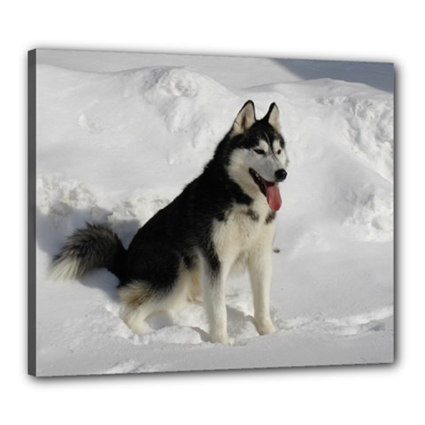Siberian Husky Sitting in snow Canvas 24  x 20