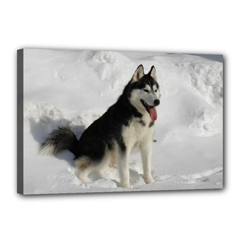 Siberian Husky Sitting in snow Canvas 18  x 12