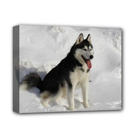 Siberian Husky Sitting in snow Deluxe Canvas 14  x 11