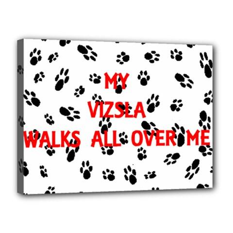 My Vizsla Walks On Me  Canvas 16  x 12