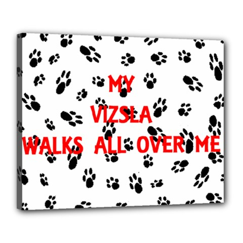 My Vizsla Walks On Me  Canvas 20  x 16