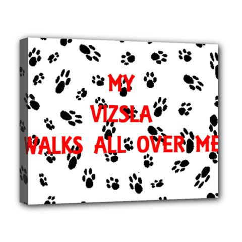 My Vizsla Walks On Me  Deluxe Canvas 20  x 16