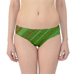 Stripes Course Texture Background Hipster Bikini Bottoms