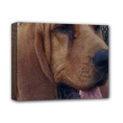 Bloodhound  Deluxe Canvas 14  x 11
