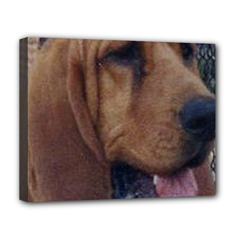Bloodhound  Deluxe Canvas 20  x 16