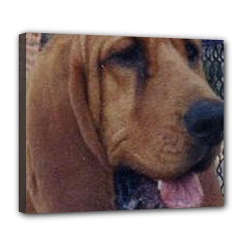 Bloodhound  Deluxe Canvas 24  x 20