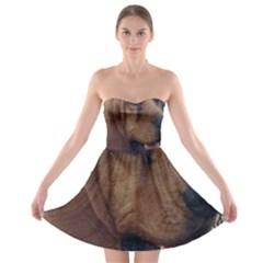 Bloodhound  Strapless Bra Top Dress