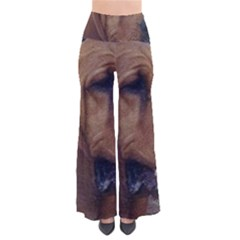 Bloodhound  Pants